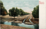 Irrigating an Orange Grove in California