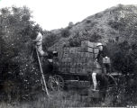 J. F. Cumberland Helping Load Oranges On His Ranch