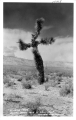 """A Living Cross"" Desert Joshua Tree of California"
