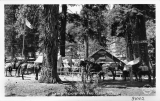 Camp Lewis on the Kern River