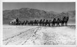 Historic 20 Mule Team Borax Wagon Train as it Freighted Supplies into and Borax out of Death Valley in