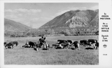 Utah Cattle Ranch Spanish Fork Utah