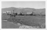 Shipping Livestock in Modern Trucks and Trailers Bridgeport, Mono County, California