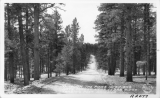 Through the Pines in Kaibab National Forest near Cedar Ridge Trading Post, Arizona