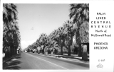 Palm Lined Central Avenue North of Mcdowell Road Phoenix Arizona