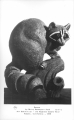 Racoon by Betty Davenport Ford Art Exhibition - Los Angeles County Fair Pomona, California 1948