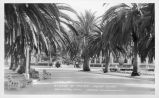 Avenue of Palms - Indian School Arlington, California