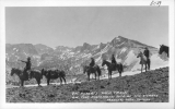 C.A. Roberts Pack Train on the Mammoth Rim of the Sierras